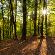 Forest in a rays of morning sun — Stock Photo