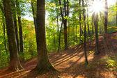 Bos door een zonnige dag — Stockfoto