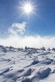 Winter windy day — Stock Photo