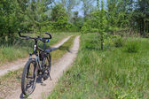 Bicycle on a forest road — Stock Photo