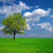 Beautiful green tree among a fields - Stock Photo