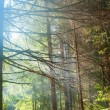Stock Photo: Forest in blue mist