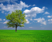 Beautiful green tree among a fields — Stock Photo
