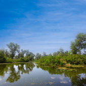 Verde de los árboles se refleja en un lago tranquilo — Foto de Stock