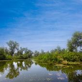 Gröna träd återspeglas i en lugn sjö — Stockfoto