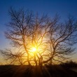 Tree silhouette on a sunset background — Stock Photo