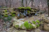 Mountain forest scene — Stock Photo