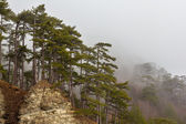 Mountain forest in a fog — Foto Stock