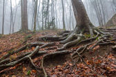 Trees in a mist — Stock Photo