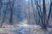 Blue misty forest — Stock Photo