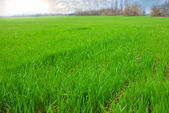 Green rural field — Stock Photo