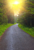 Road through a forest — Stockfoto