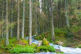 Mountain forest — Stock Photo