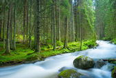 Beautiful river rushing through a forest — Stock Photo