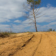 Alone pine tree in a desert - Stock Photo
