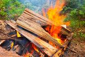 Closeup campfire — Stock Photo
