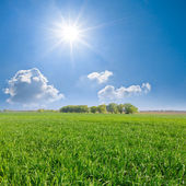 Green fields under a sparkle sun — Stock Photo
