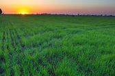 Am frühen morgen ländliches motiv — Stockfoto