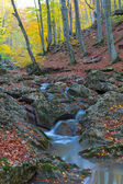 Small blue brook in a mountain canyon — Stockfoto