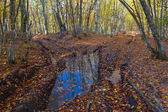 Blue pond in a forest — Stock Photo