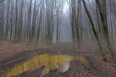 Pond in a misty forest — Stock Photo