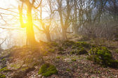 Forest by a sunny day — Stock Photo