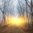 Misty forest in a rays of sun — Stock Photo