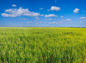 Green rural field panorama — Stock Photo