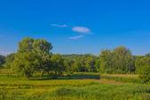 Green rural scene — Stock Photo