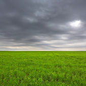 Green field under a dark clouds — Stock Photo