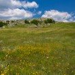 Green mountain pasture — Stock Photo