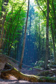 Summer forest in a rays of sun — Stock Photo