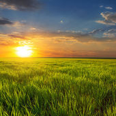 Sunset among a green fields — Stock Photo
