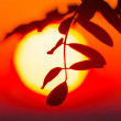 Tree branch silhouette on a evening sun background — Stock Photo