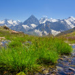 Green grass in a mountain valley — Stock Photo