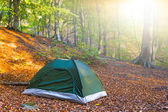 Green touristic tent in a autumn forest — Stock Photo