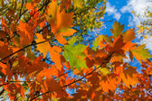 Red autumn leaves background — Стоковое фото