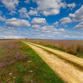 Ground road among a steppe — Stock Photo