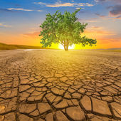 Green tree among a cracked earth — Stock Photo