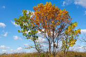 Beautiful oak tree on a blue sky background — Stock Photo