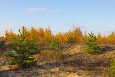 Podzimní les scéna — Stock fotografie