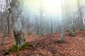Podzimní Les slunečný den — Stock fotografie
