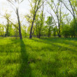 Stock Photo: Beautiful green forest glade