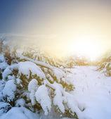 午前中で冬の森 — ストック写真