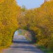 Road through a tree tunnel — Stock Photo #34203783