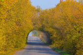 Road through a tree tunnel — Stock Photo