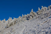 Bir tepenin yamacında orman dondurulmuş kış — Stok fotoğraf