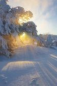 Vintern sunrise — Stockfoto