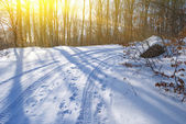 Winter forest at the evening — Stock Photo