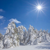 Winter forest at the sunny day — Stock Photo